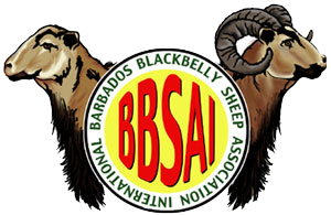 Barbados Blackbelly Sheep Association International